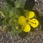 Green with Yellow Flower jpg